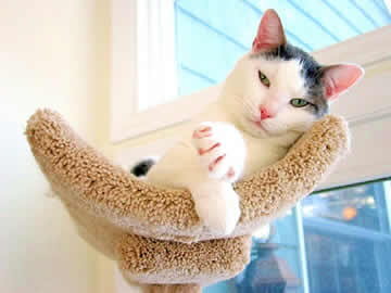 a cat in a cat tree is looking at you