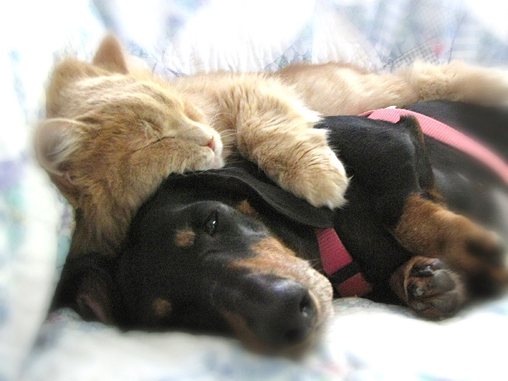 Dog Curled Around Cat