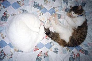 Huckleberry and another cat, Snow, are both asleep on a patchwork quilt.         They are on their sides, curled up into little circles. Snow's face is         hidden in her paws but Huckleberry is clearly smiling.