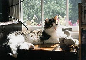 Huckleberry is in one of his favorite place, lying in front of a window, green leaves and red flowers just outside, the sun falling across him,       warming him and lighting him up.