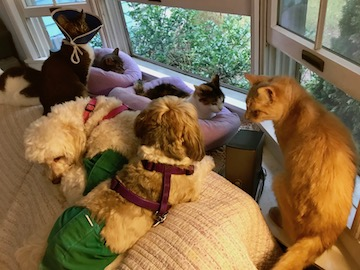a little cat, his head in an e-collar, is sharing the couch with other special-needs dogs and cats